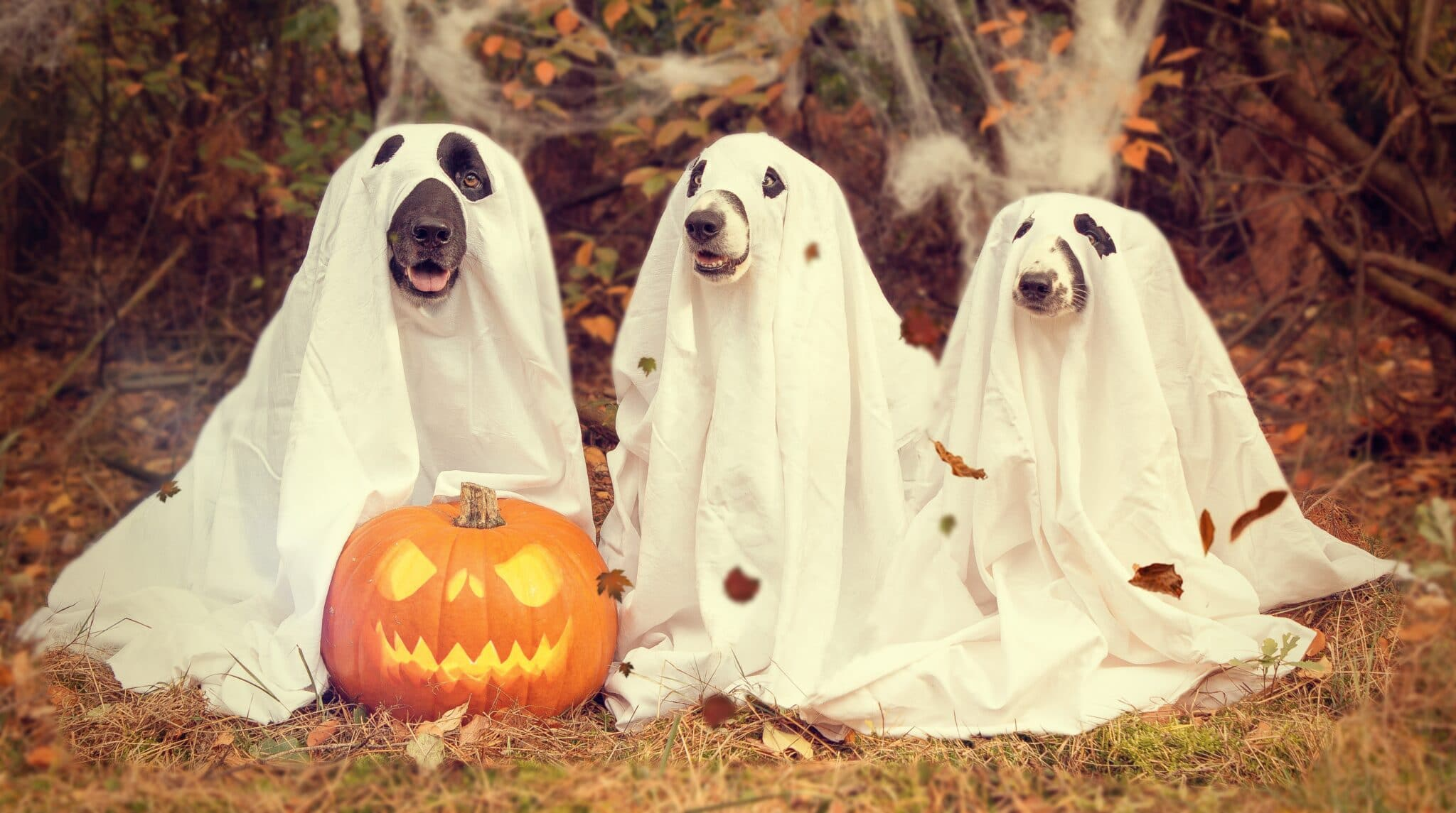 Halloween Trick or Treating Safely in the Tricky Year of 2020